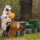 mladi pčelari