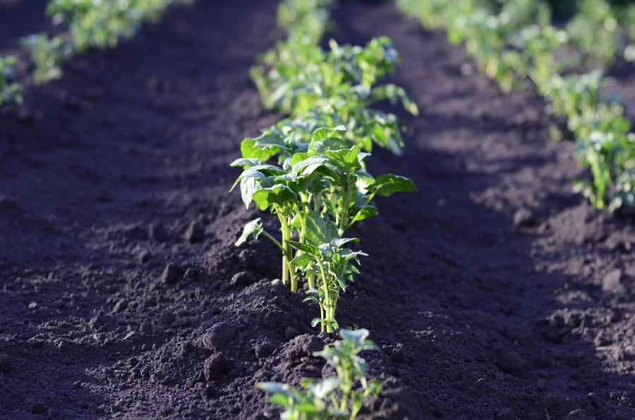 agroindustrija
