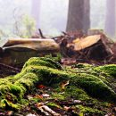 krađa šume