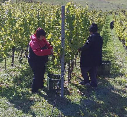 carski vinogradi